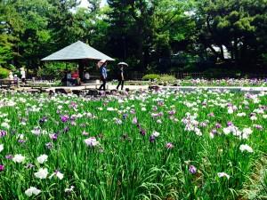 名古屋市中区子ども英語教室English Factory鶴舞公園花まつり